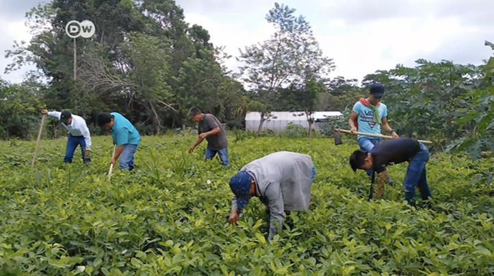 Guatemala: poner freno al monocultivo de palma africana