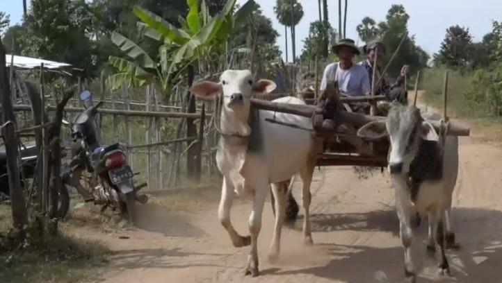 Agricultores enfrentan el cambio climático en Myanmar