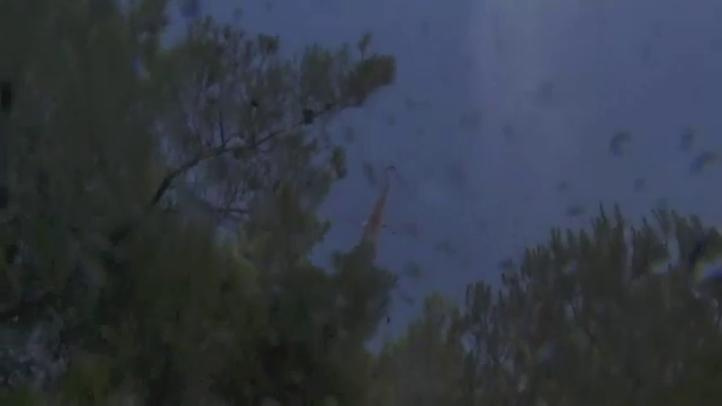 Se registra fuego forestal en las afueras de Atenas