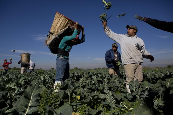 Campesinos de Hidalgo insisten en regar con aguas residuales
