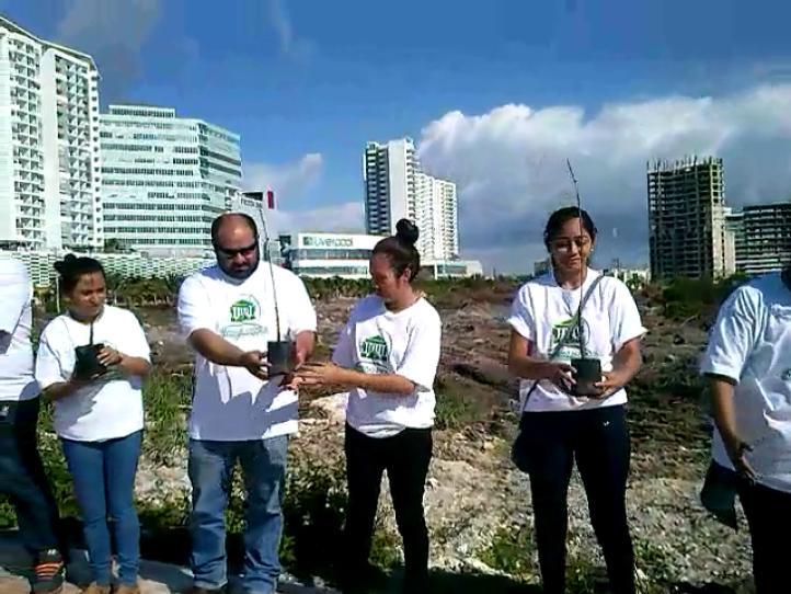 Donación de plantas de mangle