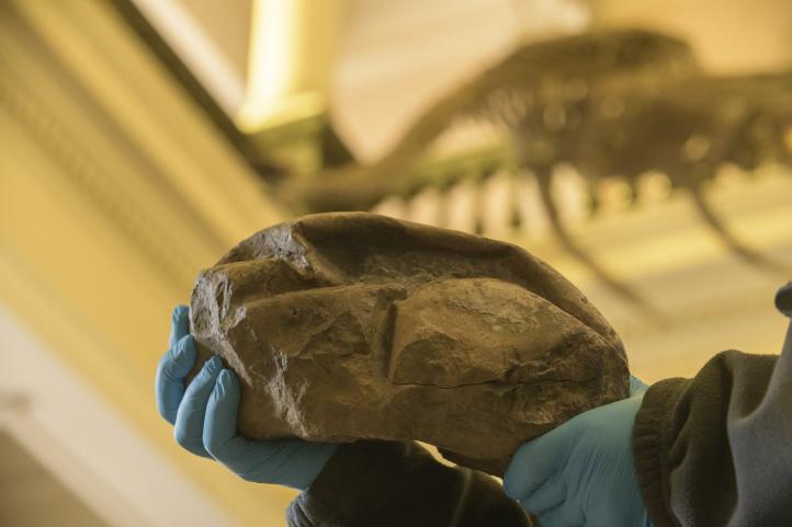 Descubren huevo más grande de la era de los dinosaurios en Antártida