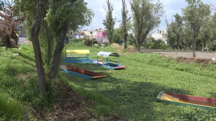 Siembran hortalizas nativas en San Andrés Mixquic