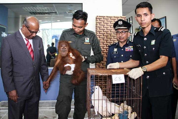 Rescatan a 400 animales que iban a ser traficados