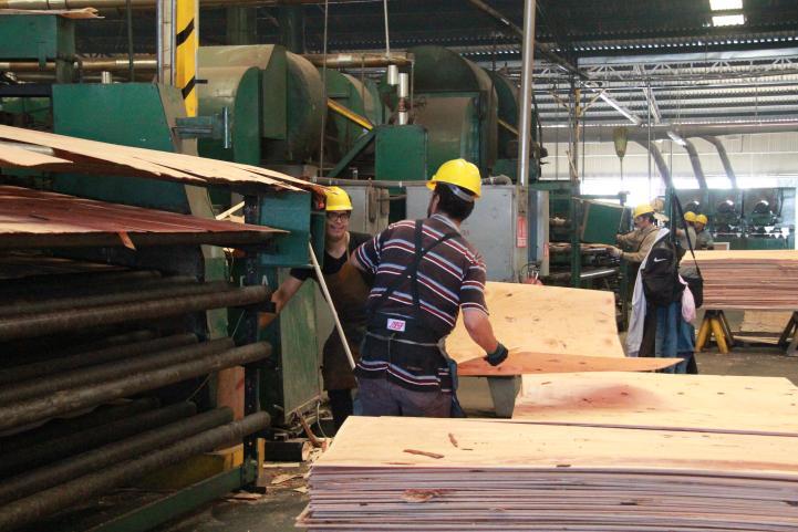 Los obstáculos a las empresas forestales comunitarias