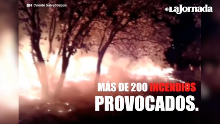 Salvabosques en Jalisco: Apagan incendios sin protección ni ayuda
