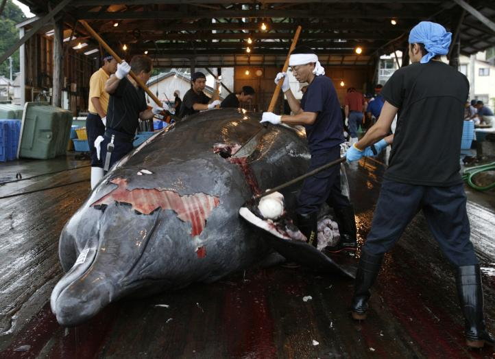 Ordena La Haya a Japón cesar cacería de ballenas en el Antártico