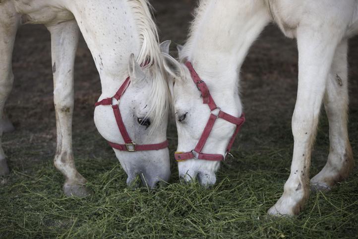 Han cerrado 70 circos por la nueva ley sobre animales