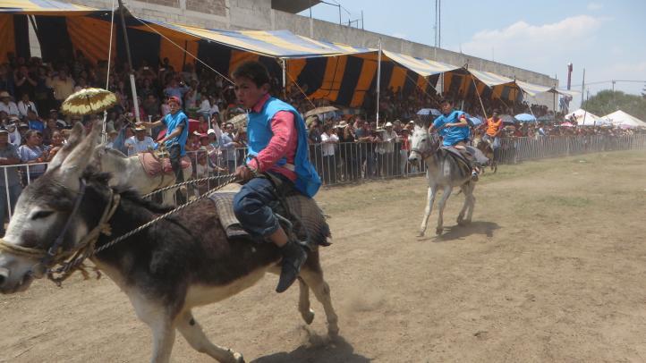 Feria Nacional del Burro Otumba 2017