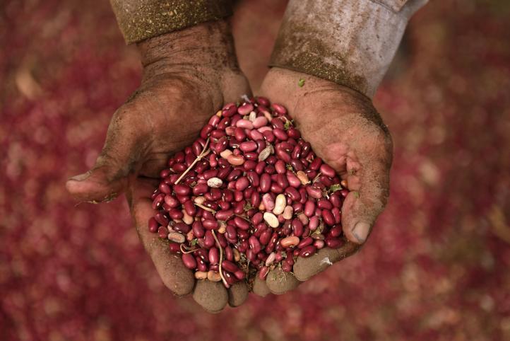 Los frijoles contra la sequía de Centroamérica