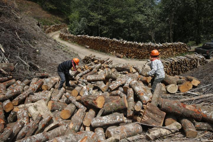 En La Trinidad, explotación racional del bosque