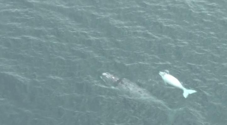 El cambio climático también afecta a las ballenas