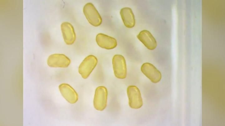 """Científicos desarrollan """"imanes"""" líquidos con gotas magnéticas"""