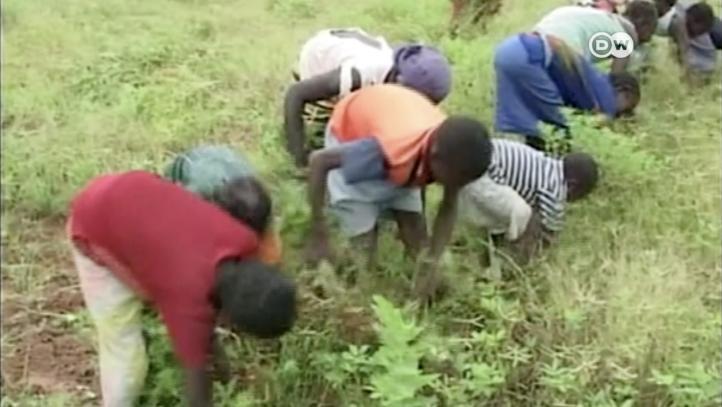 Día Mundial contra el Trabajo Infantil: combatiendo la explotación
