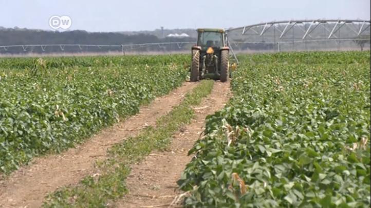Agroquímicos afectan a apicultores de Yucatán