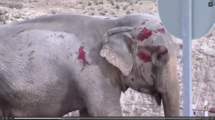 Muere elefante en accidente de camión en España