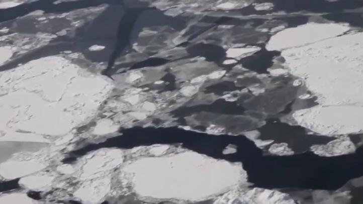 Reducción de oxígeno en los océanos hace peligrar a especies antárticas