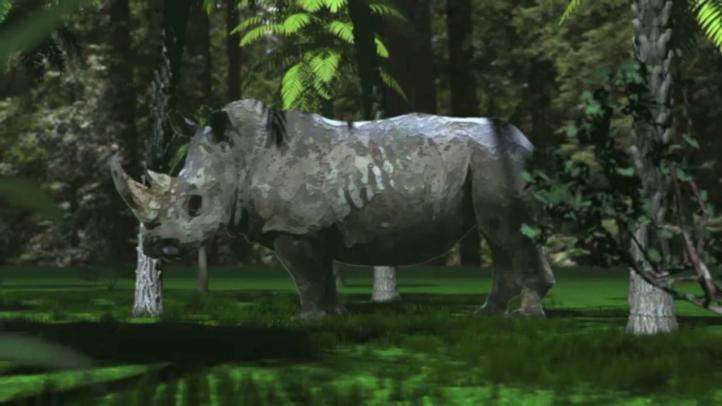 Videografía: Las especies en peligro de extinción