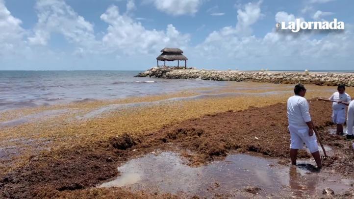 Sargazo sigue dando problemas en la Riviera Maya