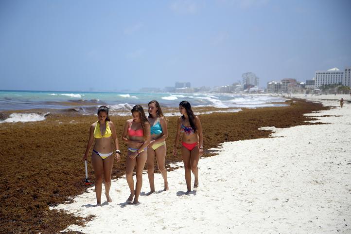 Inusual acumulación de sargazo en costas del Caribe