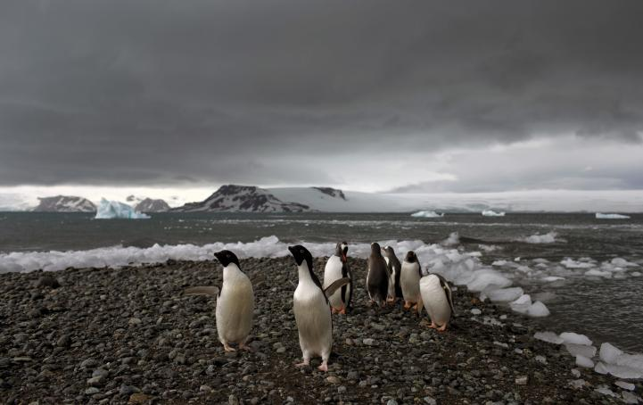 La Antártida tiene la clave para el futuro de la humanidad