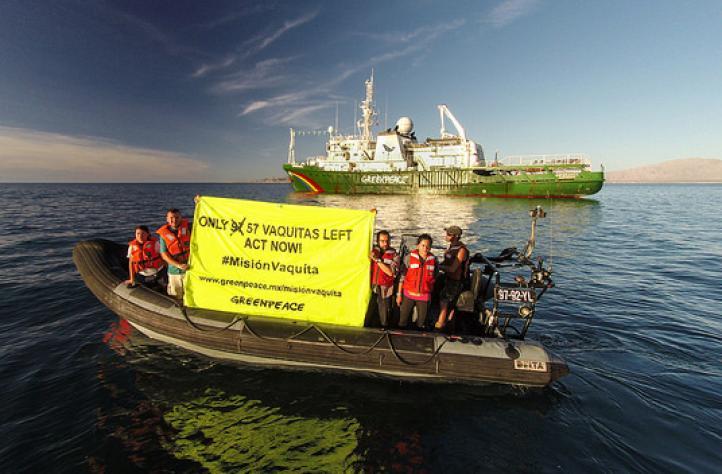 Vocalista de Café Tacvba participa en misión para salvar a vaquita marina