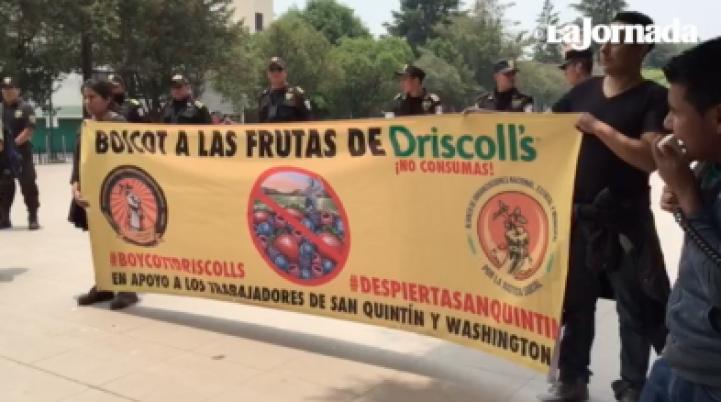 Lanzan boicot contra Driscolls, en apoyo a los jornaleros de San Quintín