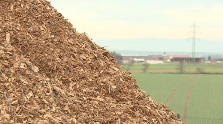 La madera podrida hace a Austria más verde