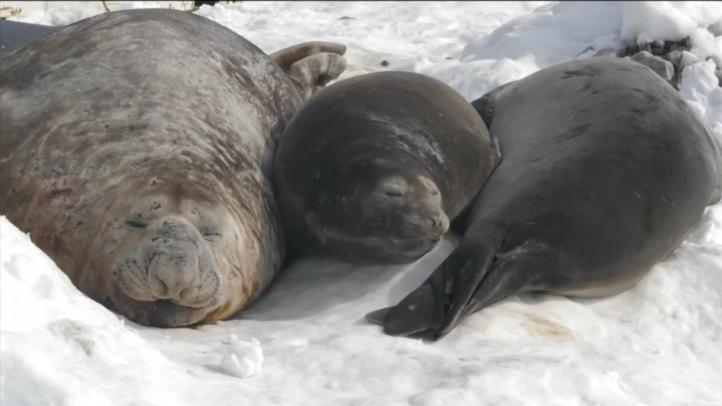 Científicos en la Antártida advierten de una vasta ruptura de hielo marino
