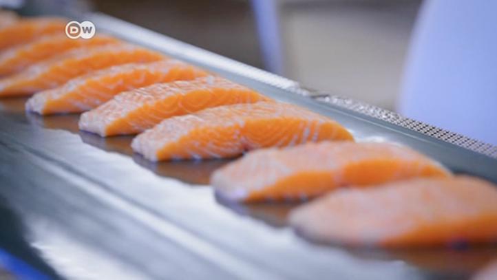 Chile: el negocio sucio con el salmón