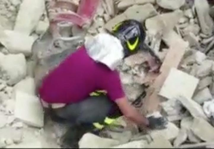 Gato sobrevive 15 días entre escombros tras sismo de Italia
