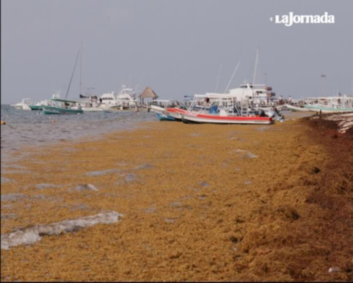 Pega sargazo al turismo en Quintana Roo