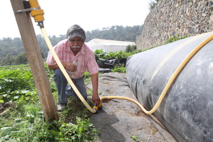 De estiércol a gas… los productores agropecuarios de la CDMX aprovechan la mierda