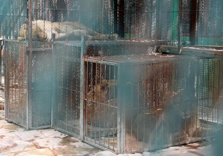 Rescatan 101 animales de zoológico particular en Puebla