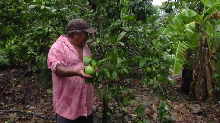 """Agricultura y turismo en Oxkutzcab, Yucatán, el """"huerto del sur"""""""