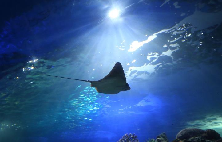 Inauguran en el DF el acuario más grande de América Latina