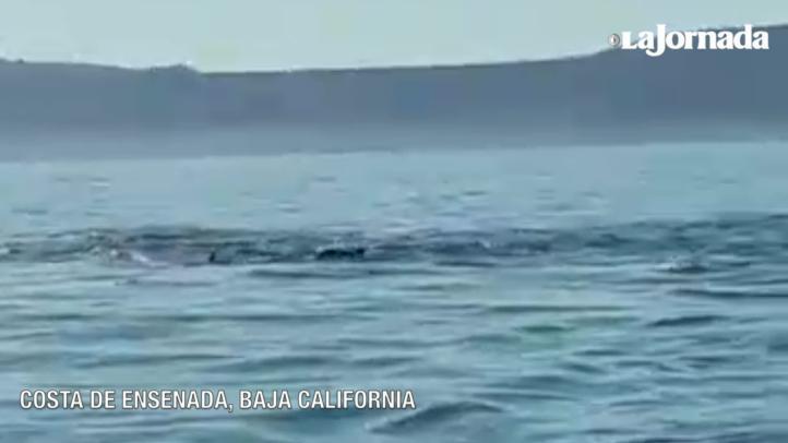 La danza de los delfines