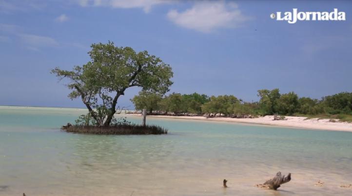 Un tesoro en el Caribe mexicano está amenazado
