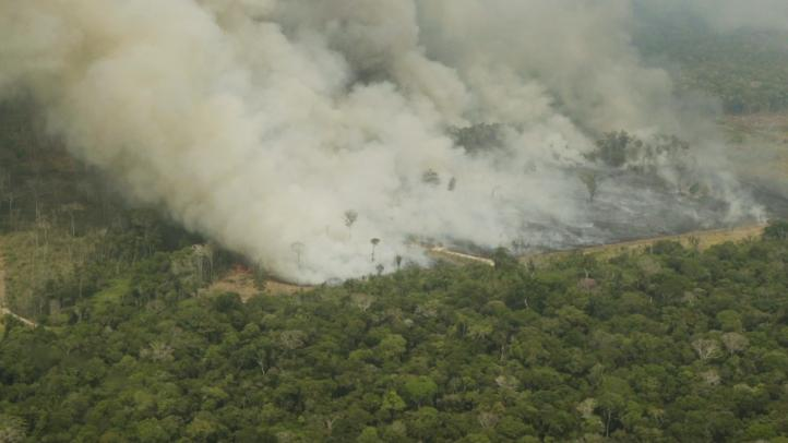 Deforestación es la culpable de los incendios en el Amazonas: estudio