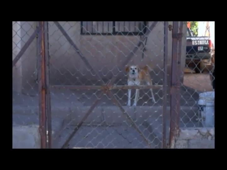 Ola de envenenamiento de perros en Hermosillo
