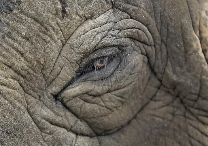 Circo Ringling Brothers eliminará actos con elefantes