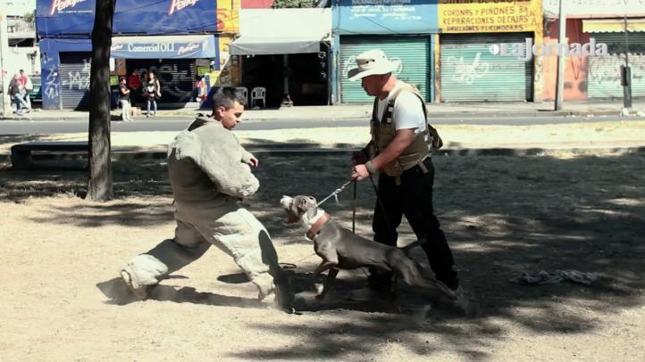 Los perros, arma de defensa en Iztapalapa