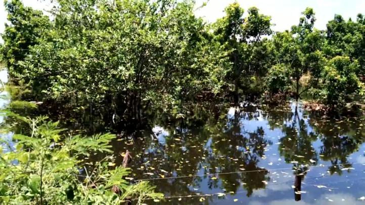 Campesinos mayas devastados por el paso de tormenta 'Cristóbal'