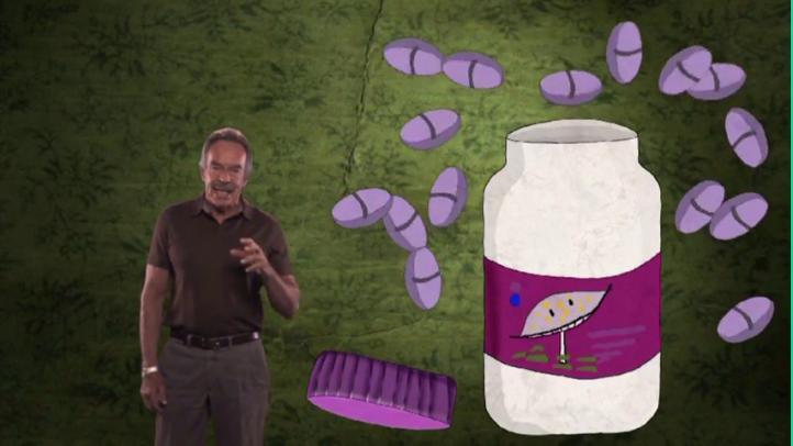 Insectos, bacterias y hongos