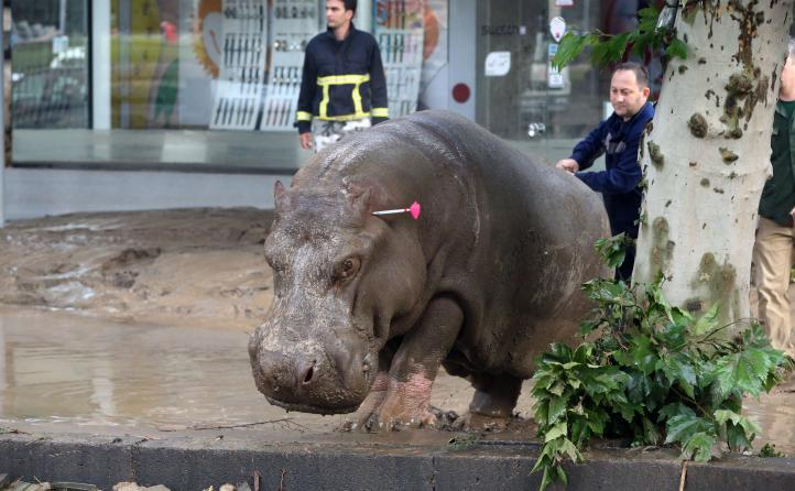 Georgia: Buscan a animales de un zoológico tras inundación