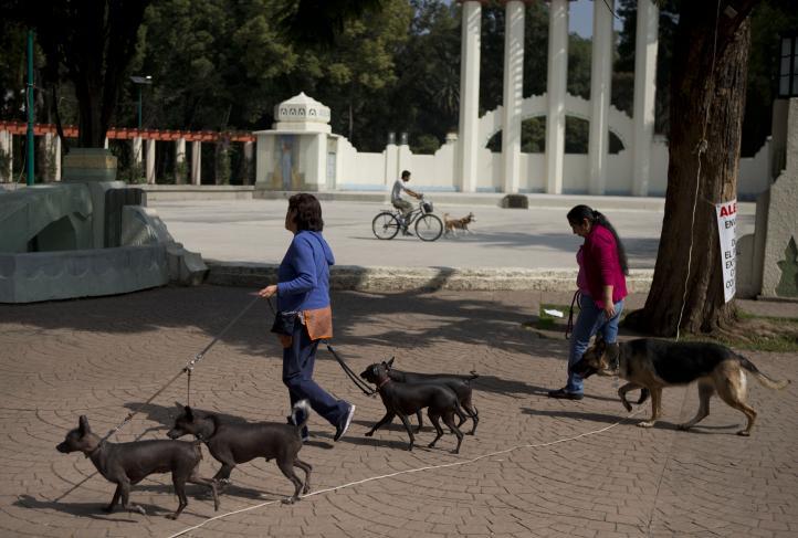 Investigan envenenamiento de perros en la colonia Condesa