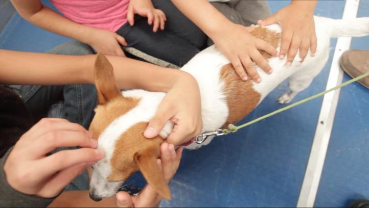 Los perros, medicina para menores víctimas de delitos