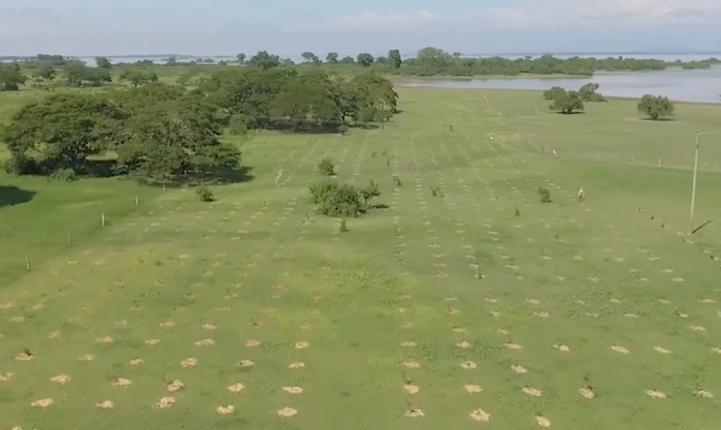 Reforestan las orillas del río Magdalena en Colombia