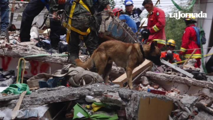 Hacen contacto con 7 sobrevivientes de la Unidad Tlalpan