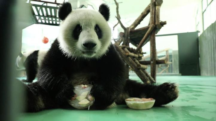Zoológico de Shanghái implementa medidas contra el calor